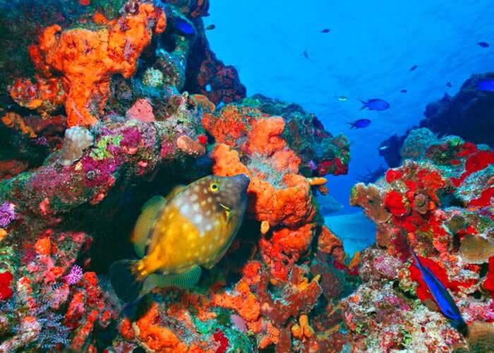 tour-cozumel-submarino-arrecife