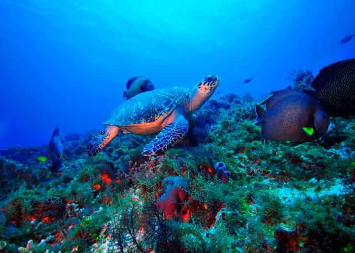 tour-submarino-cozumel-arrecife