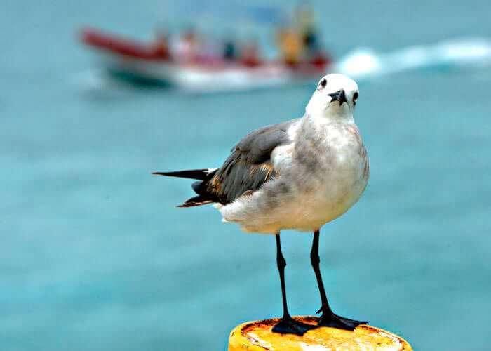 tours-ecologicos-cancun-islacontoy