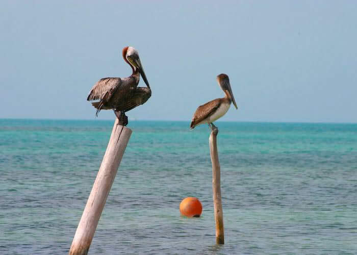 tour-cancun-islacontoy-aves