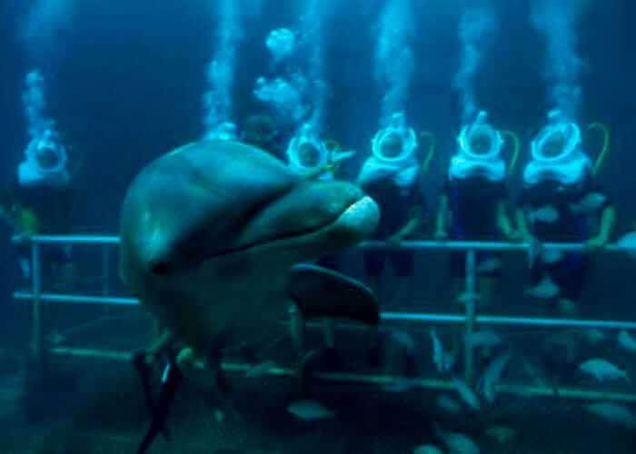 nadar-con-delfines-bajo-el-agua-xelha