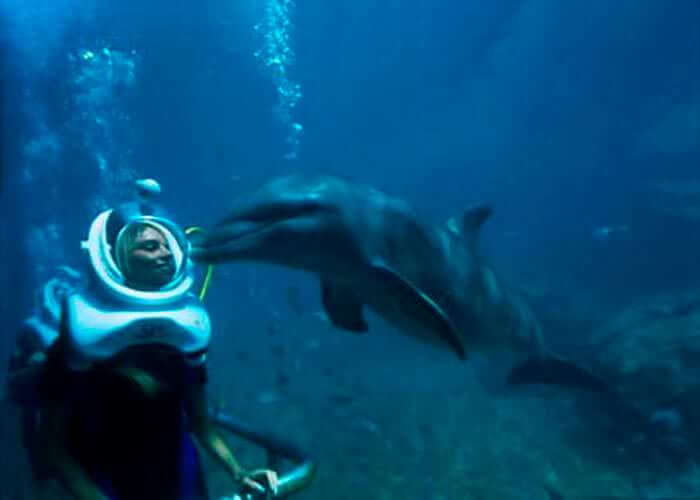 buceo-con-delfines-xelha