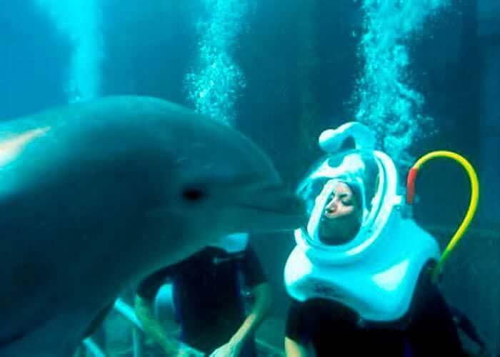 tourscancun-caminata-submarina-delfines