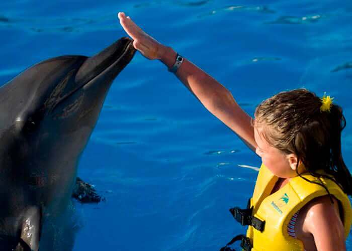 programa-interactivo-delfines-cancun-wetnwild