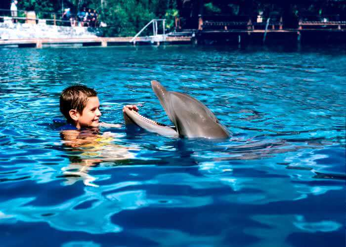 nado-con-delfines-ride-en-xelha