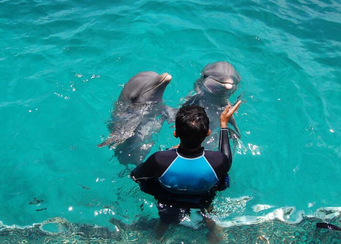 delfines-en-islamujeres-y-parquegarrafon