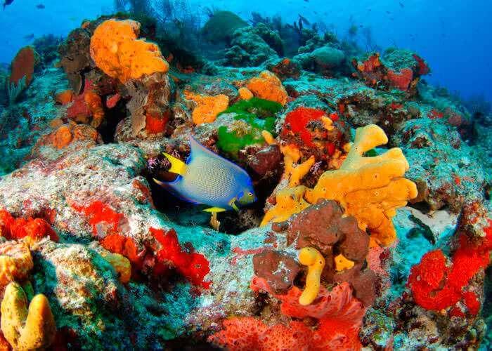 tours-snorkel-rivieramaya-caleta-cenotes