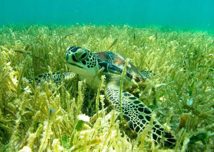 tours-rivieramaya-snorkel-mayanadventure