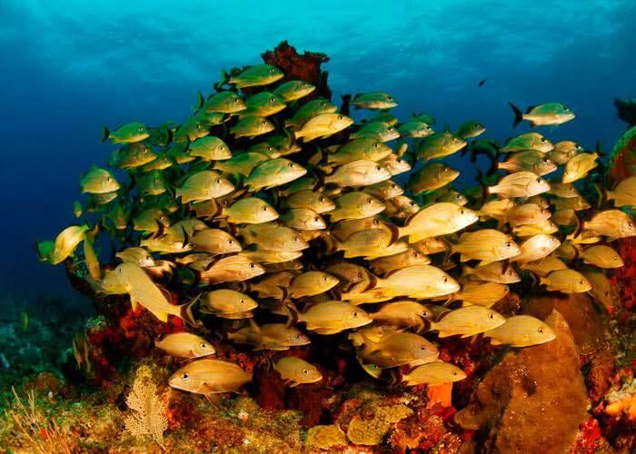 tour-snorkel-cancun-puertomorelos