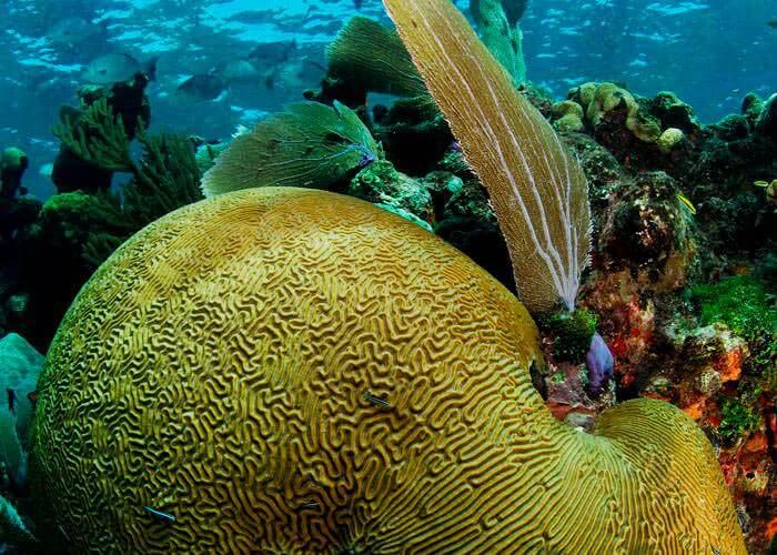 tour-snorkel-cancun-amaris
