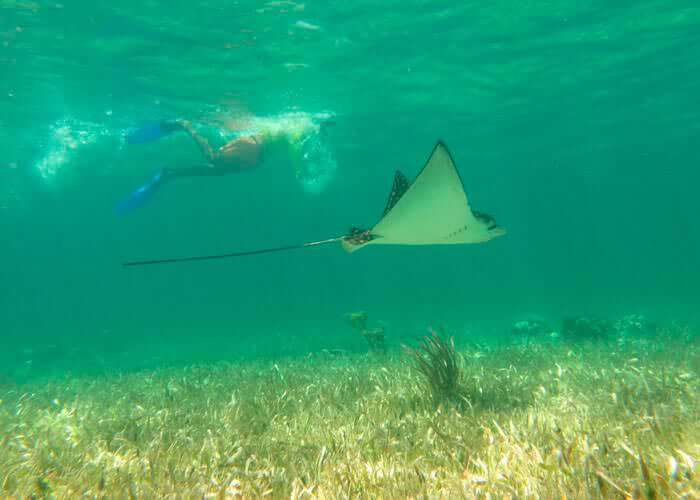 tours-rivieramaya-snorkel-puertomorelos