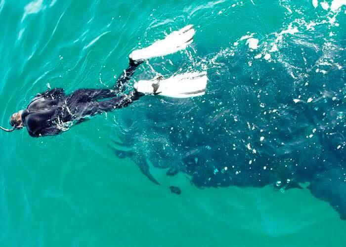 snorkeling-con-tiburonballena-en-cancun