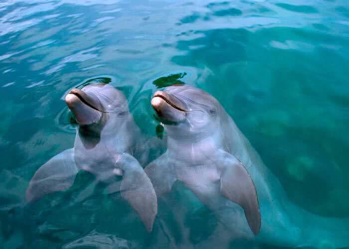 delfines-en-xelha-primax