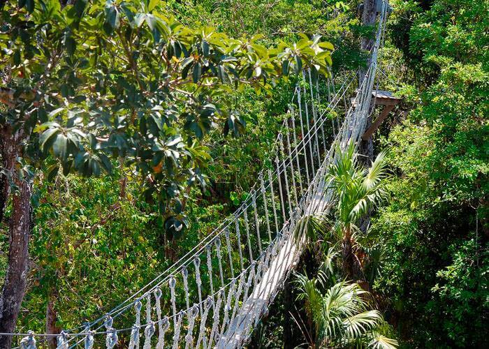 tours-extremos-cancun-selvatica-puente