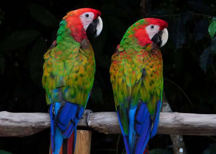 tour-aventura-cancun-selvatica-aves