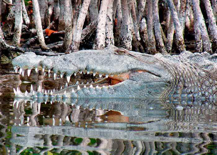 tour-reserva-de-la-biosfera-de-siankaan-cocodrilo