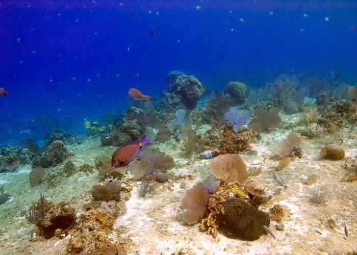 actividades-cancun-snorkel-cozumel