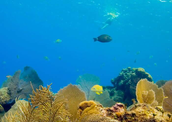 cosasquehacer-cozumel-snorkelear