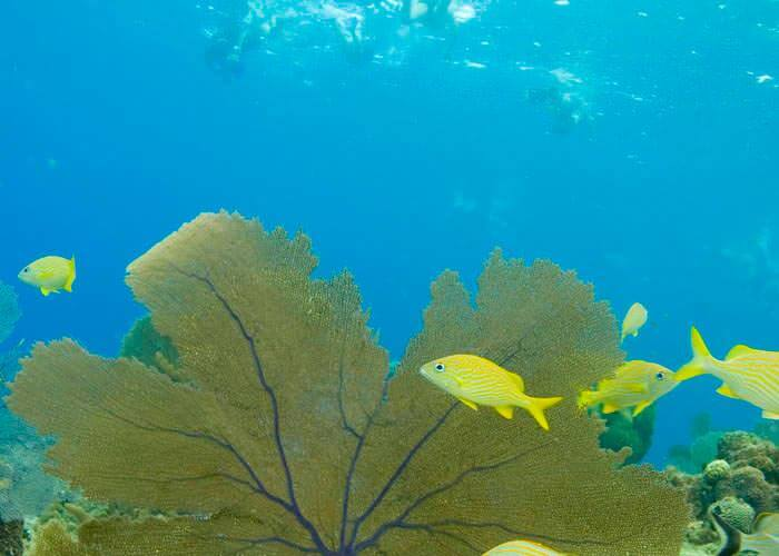 tours-cozumel-donde-snorkelear
