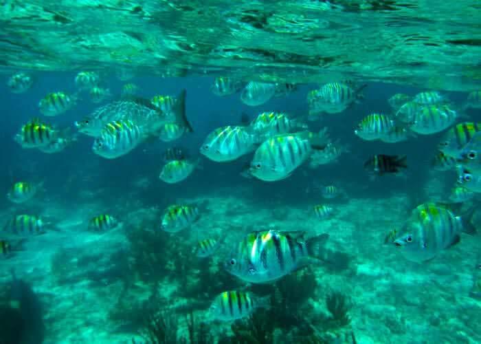 snorkelear-en-cancun-arrecifes