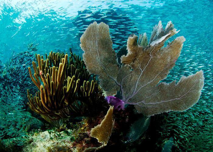 actividades-cancun-snorkel-arrecifes