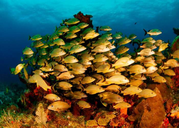 actividades-cancun-snorkel-peces