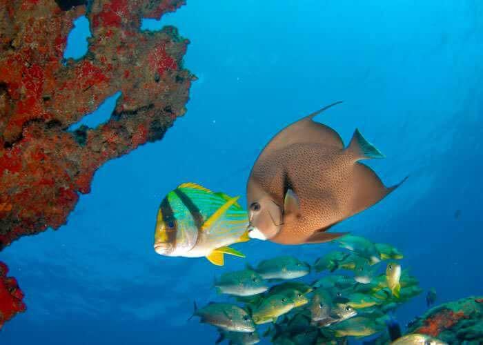 tours-snorkel-cancun-peces