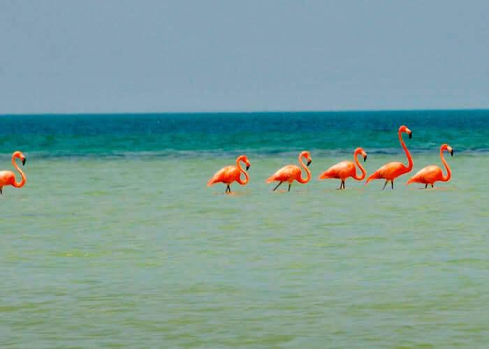 tours-en-cancun-a-isla-holbox