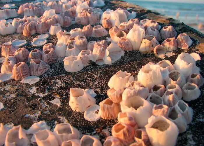 tour-a-holbox-caracoles-de-mar