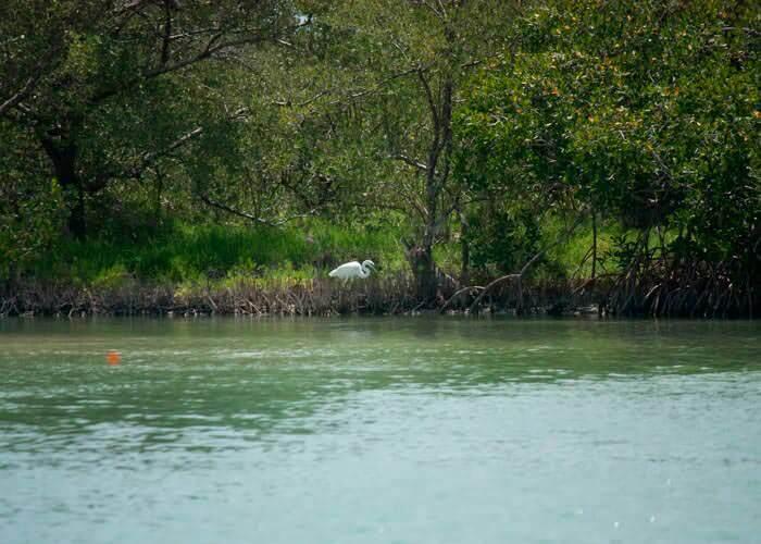 atracciones-en-cancun-isla-holbox