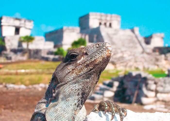 tour-ruinas-mayas-de-tulum