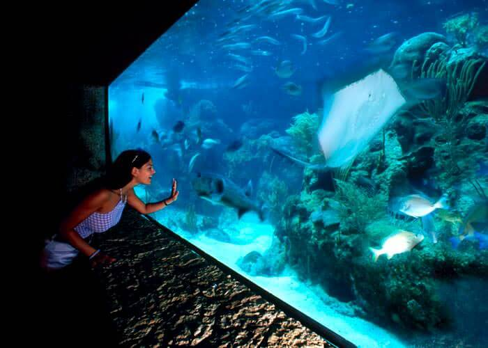 tourxcaret-cancun-aquarium