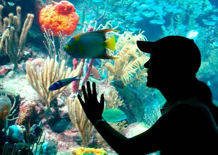 parque-xcaret-acuario-toursenrivieramaya