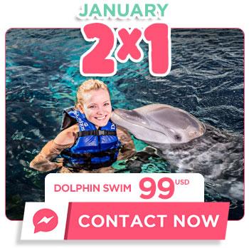 dolphin swim tour chsritmas presale deals
