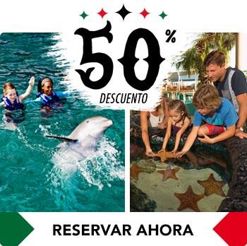 acuario de cancun show de delfines y nado con delfines