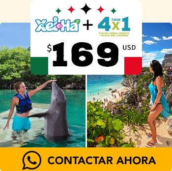 Delfin nadando en Xel ha y aventura 4x1 en Tulum, Cobá y nado en Cenotes