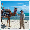 Tour Camel Safari