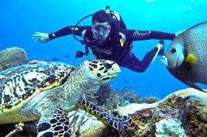 buzo apreciando una tortua y un pez en arrecifes de Cozumel