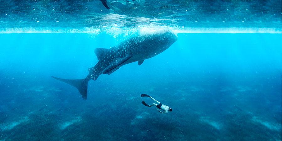 hombre joven nadando snorkel