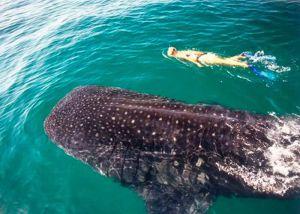 mujer joven nadando en el mar en isla mujeres