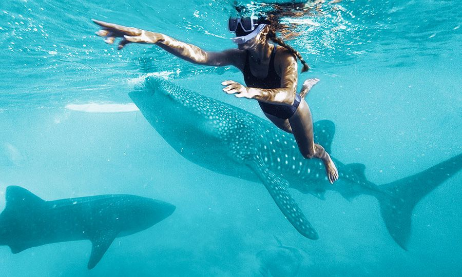 mujer joven con snorkel nadando junto a whale sharks