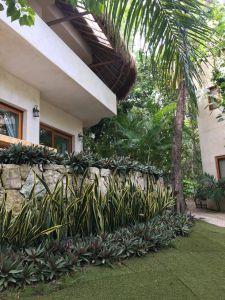 plantas en hotel de tulum